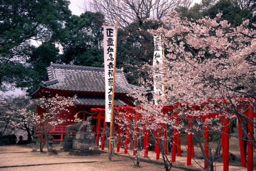 Ogi Park is a famous spot for cherry blossom viewing in spring,