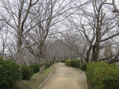 ogi park trees