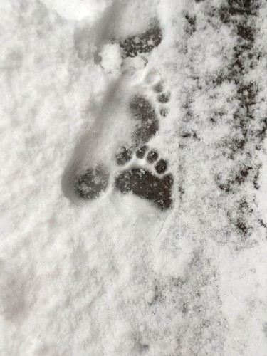 My footprint