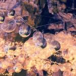 Abukuma Cave: Come Explore the Underground Caverns