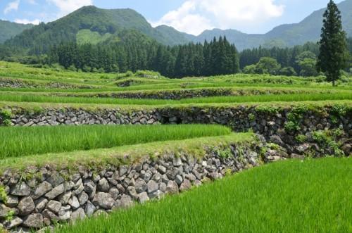 Terraced rice fields in Iiyama Fukushima