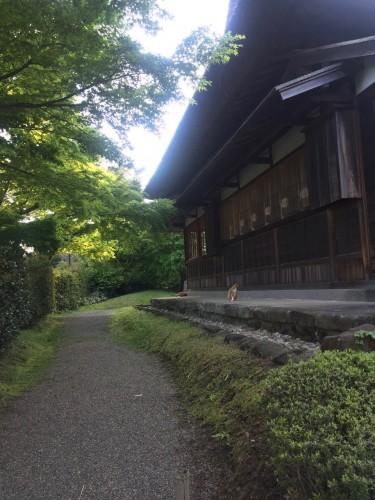 Tomcats also Enjoy Sankeien Gardens