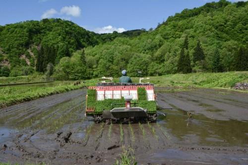 Driving the Rice Planting Vehicle, Niigata, Takane