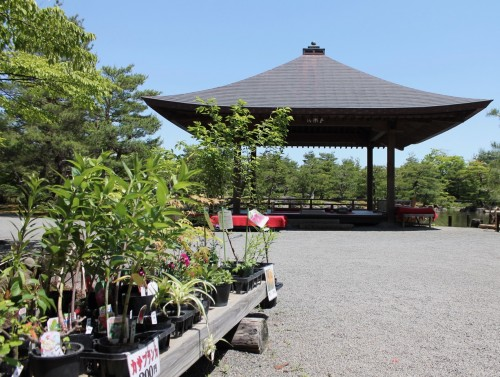 Plants or Flowers sold at Jorakuen Japanese Garden, Fukushima, Japan.