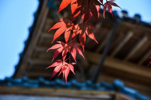 Autumn Colors in Murakami