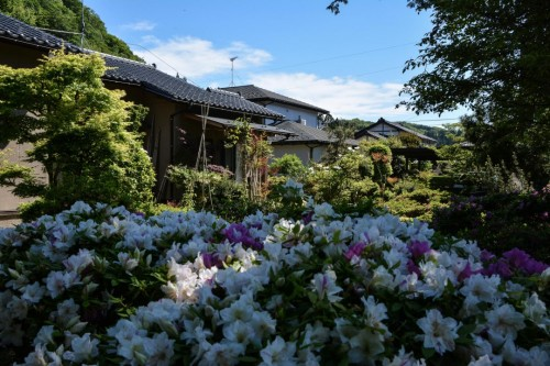 Flowers at Mr. Kishi's Residence in Murakami