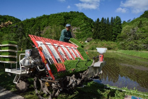 Rice Shoot Planting in Takane