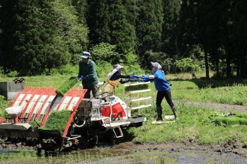 Planting Rice in Takane Village