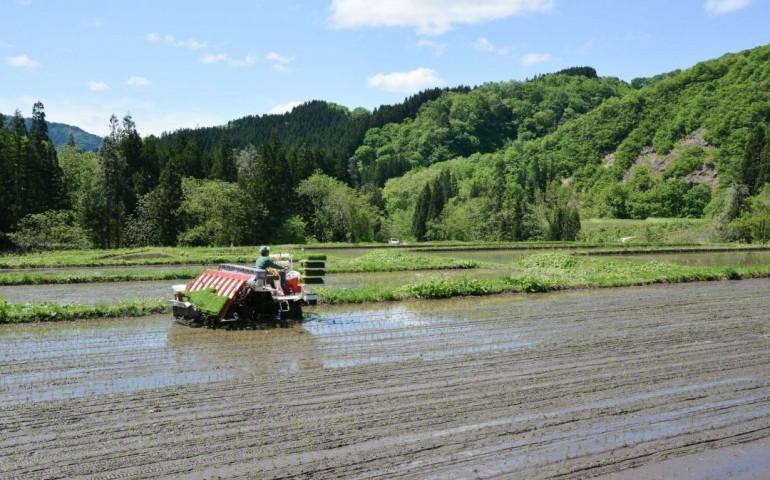 s_voyapon-planter-riz-murakami-niigata-40