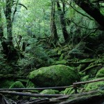 Don't leave Kagoshima without it! – Travel tricks and tips for your adventures in Yakushima!