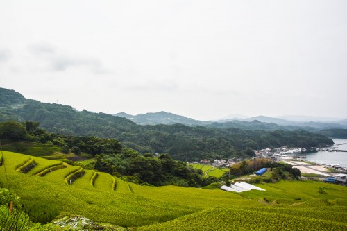 Rice fields, Oura no Tanada, Saga prefecture, Kyushu.