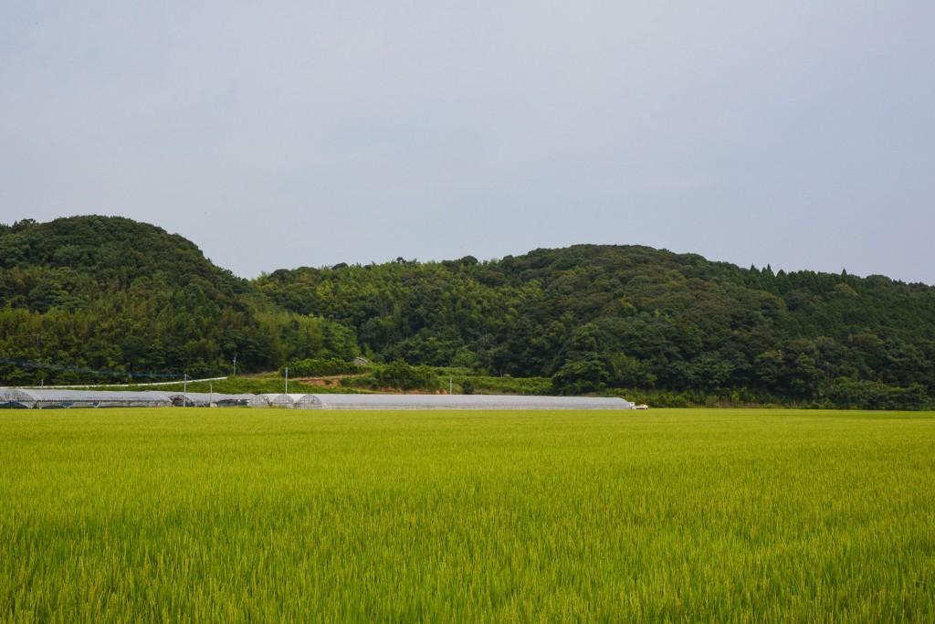 voyapon-saga-rizieres-kyushu-4