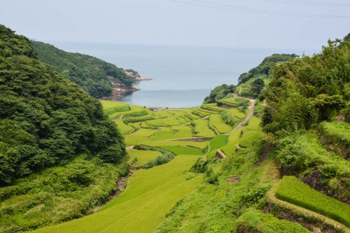 Rice fields, Hamanoura no Tanada, Saga prefecture, Kyushu.