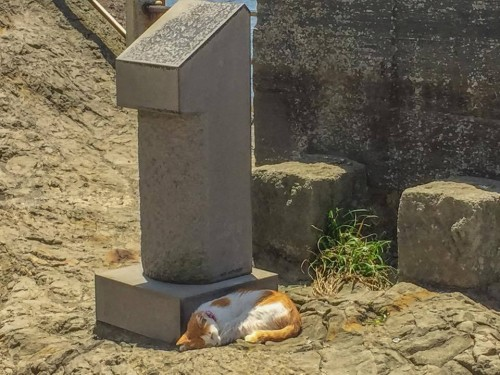 A cat is sleeping in Enoshima island, Fujisawa.