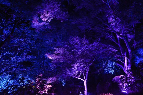 "The Exhibition ""a Forest Where Gods Live"" produced by Teamlab at Mifuneyama rakuen garden at Takeo onsen, Saga."