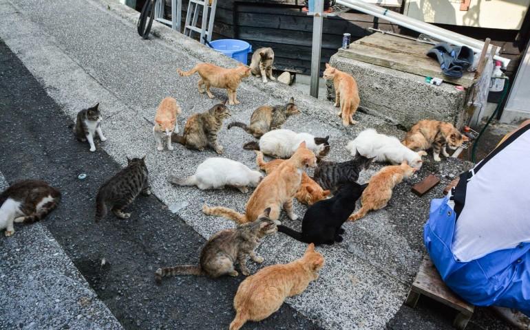 Cat island Fukashima, Oita prefecture, Kyushu.