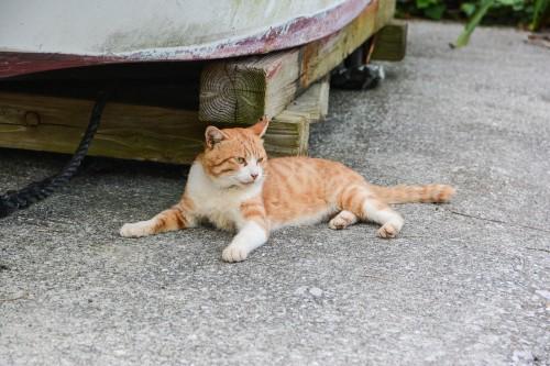 An cat at Cat island Fukashima, Oita prefecture, Kyushu.