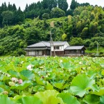 Check out the Usuki Stone Buddha and Lotus Garden, Oita