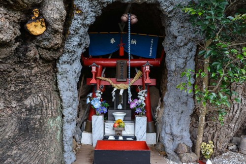 In the little hollow, you will find something embedded in the trunk, a small shrine!
