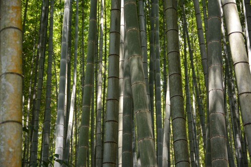The bamboo forest at Takeo onsen, Saga prefecture, Kyushu.