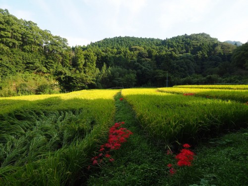 Farmer's stay in Bungotakada, Oita prefecture, Kyushu, Japan.