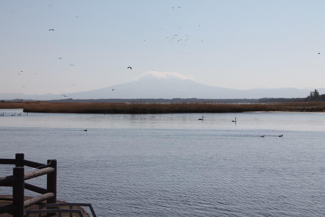 Bird-Watching Mecca of Lake Tofutsu, Eastern Hokkaido