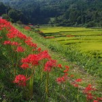 The Breathtaking Landscapes in Oita, Kyushu