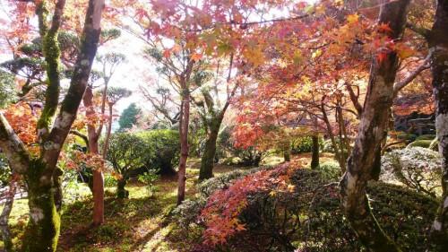 Discover Japanese Garden in Autumn at Kunenan in Saga prefecture, Japan.