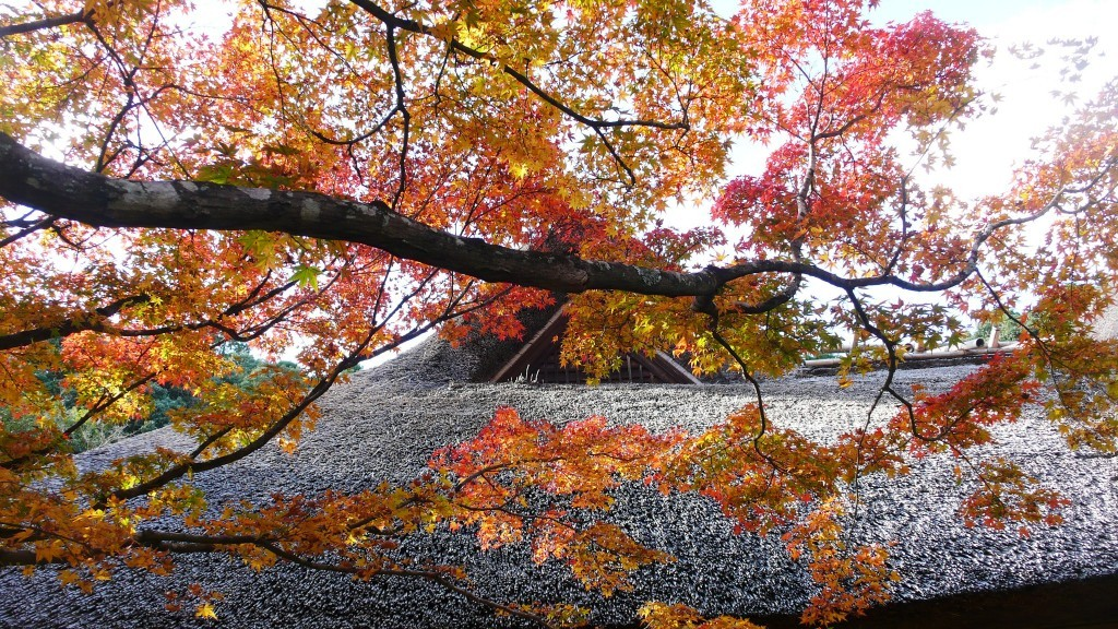 Discover Japanese Garden in Autumn at Kunenan in Saga prefecture, Japan.
