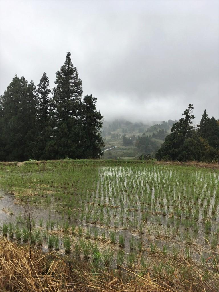 Terraced rice fields in Yamakoshi, Niigata, Japan