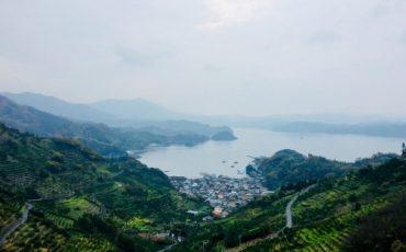 Mikan's terraced field in face of Uwakai sea, Ehime, Japan.