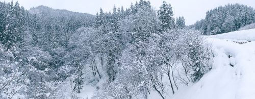 Takane Winter Landscape and Outdoor Snowshoeing Experience