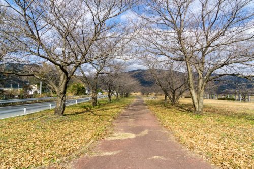 An Enjoyable Cycling Adventure Through Toon, Ehime