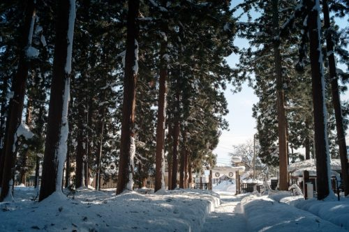 Uesugi Samurai Mausoleum Cedars in Winter Snow Yonezawa City
