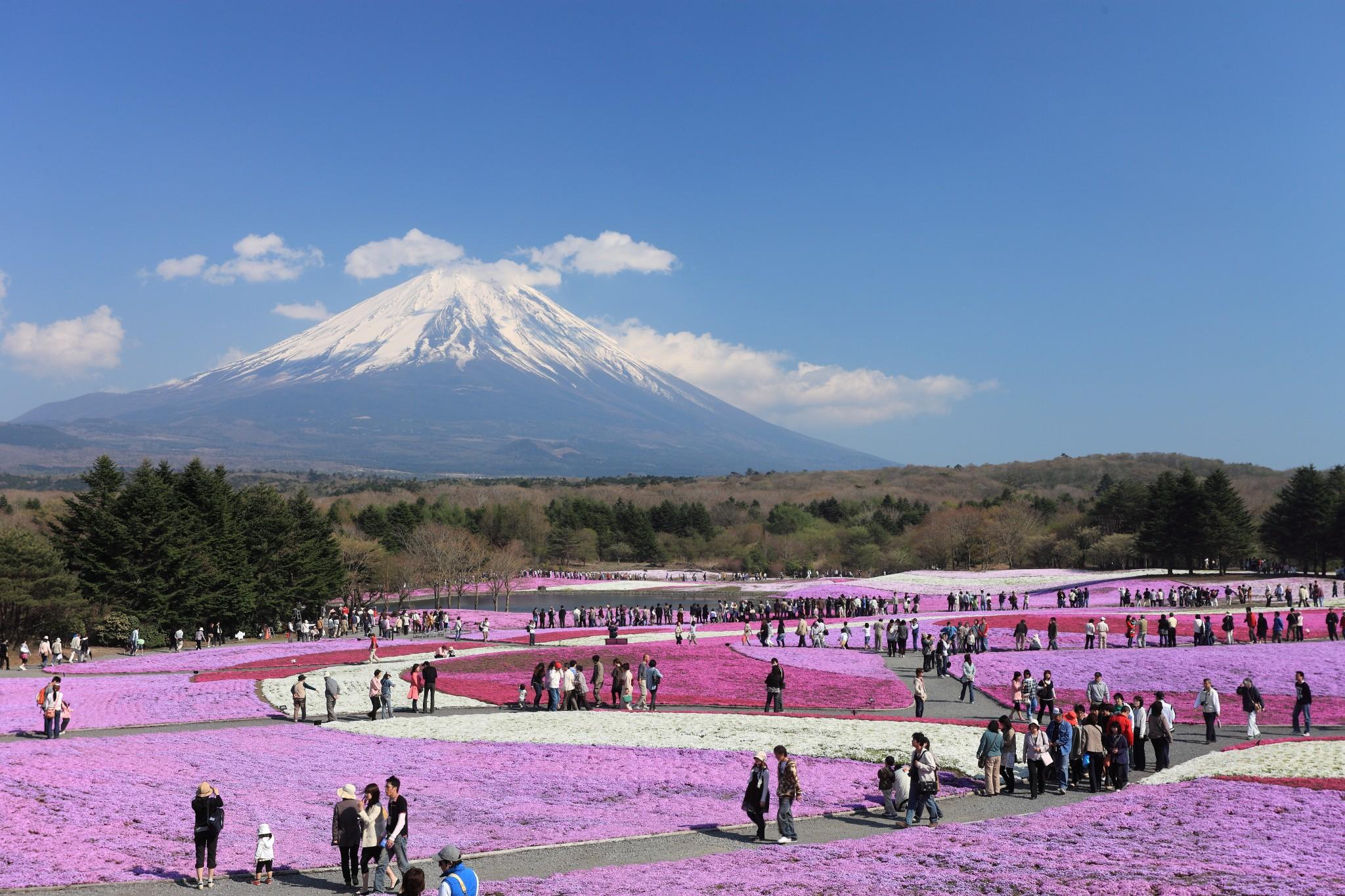 Yamanashi Fuji Shibazakura