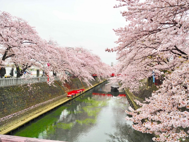 Ogaki River Cruise