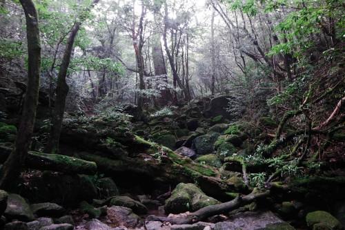 Mononoke Forrest Hiking Trail Yakushima Island Kagoshima Kyushu