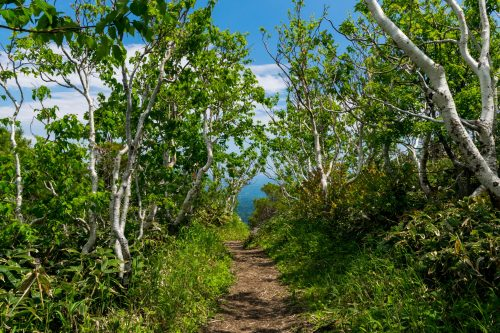 Mt. Mokoto Hokkaido Mountain Climbing Hiking Nature Wildlife Hiking Path
