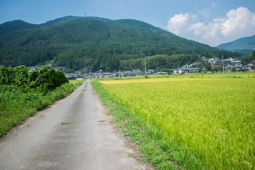 Rice fields and mountains near Yufuin, Oita Prefecture, Japan