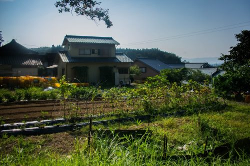 Vegetable garden of a farm near the city of Usuki, Oita Prefecture, Japan