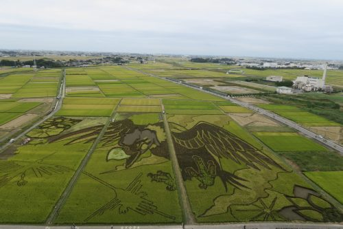 Rice Field Art Worthy of a Guiness World Record in Gyoda, Saitama