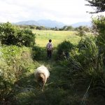 Downhill Cycling from Mt. Daisen to the Sea of Japan