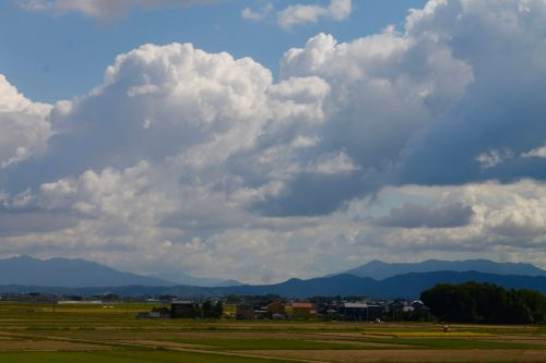 the vast rice fields in Murakami City, Niigata Prefecture, Japan.