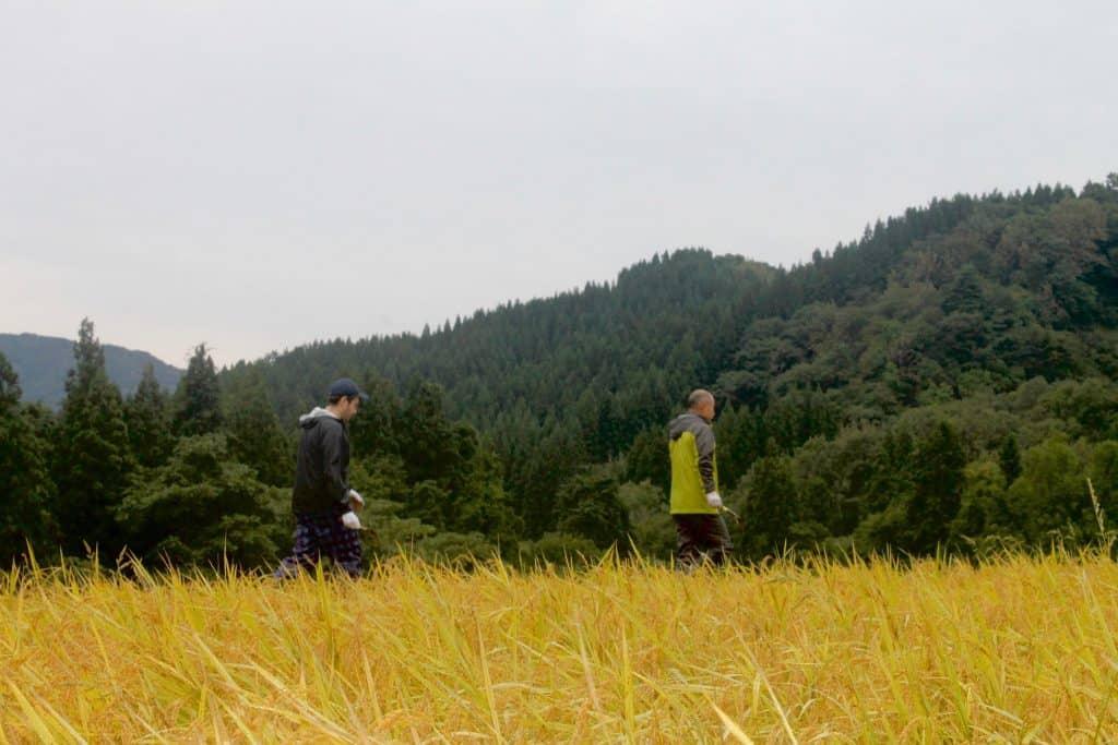Farmstay Rice Harvesting Farming Experience in Japan