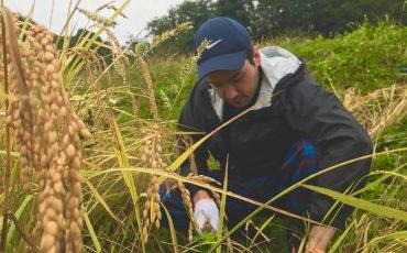 Niigata Farmstay Rural Rice Harvesting Farming Experience Minshuku Takane Murakami