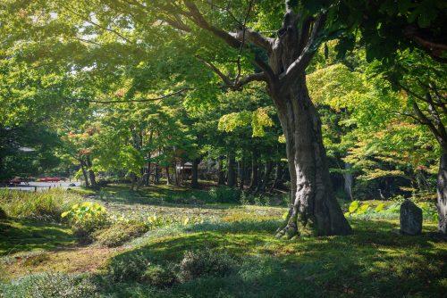 Jorakuen: A Kyoto Quality Garden in Fukushima, Tohoku region in Japan.