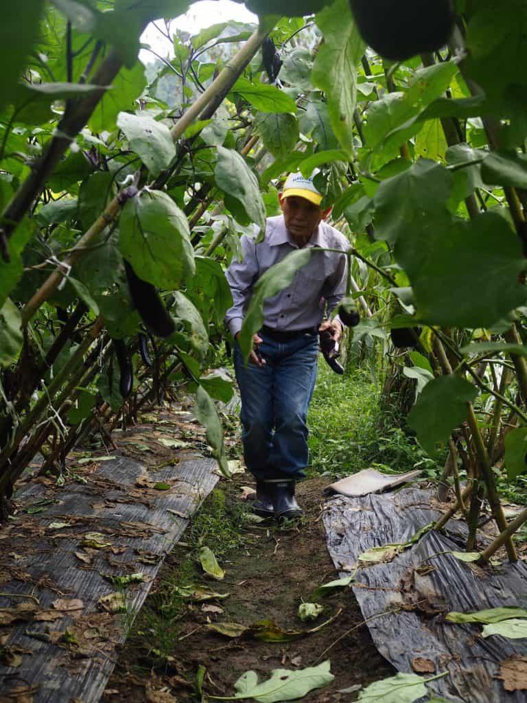 Japanese man walking through his farm in Japan