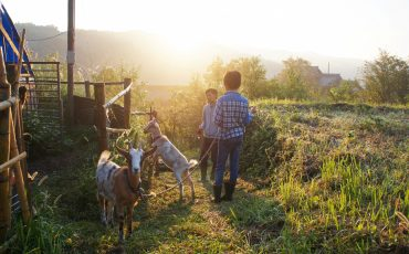 Green Tourism, Farm Stay Experience, Oita Prefecture, Kyushu