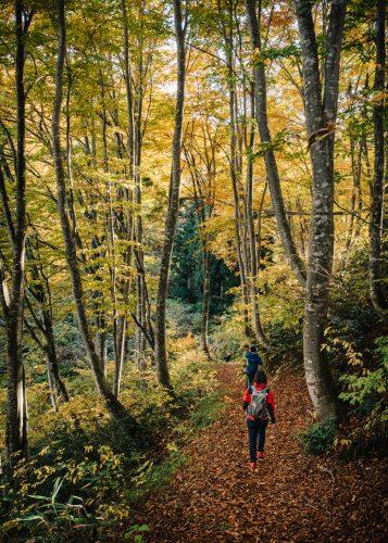 Taking a hike on the Shin-etsu trail in Nagano, Japan.