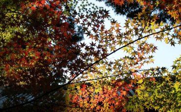 Sogenji Temple Buddhist Monastery Fall Foliage Okayama Prefecture
